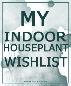My Indoor Plant Wishlist - tails.co.za